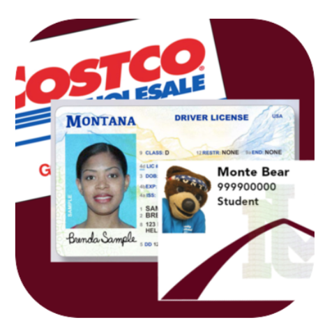 Image showing a Costco Card, a Montana Drivers license, and a griz card