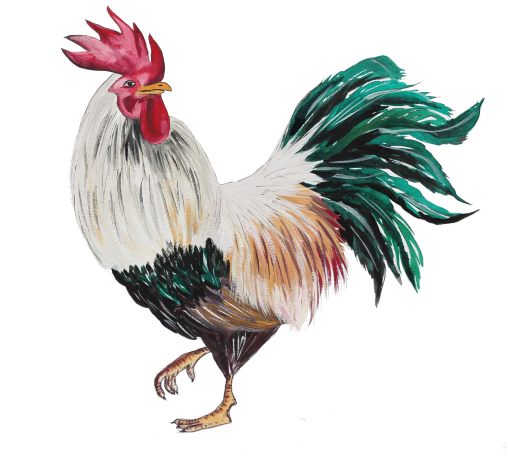 cockerel colour.png