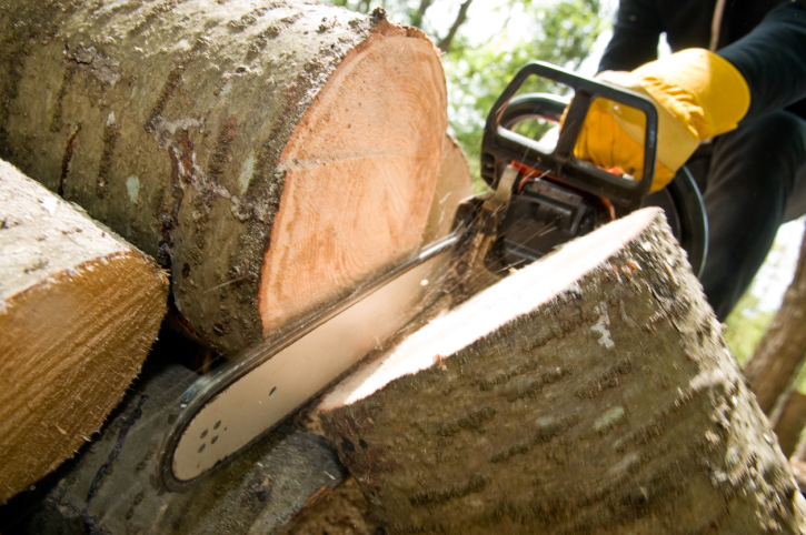 Get Tree Removal Done With the Help of Experts