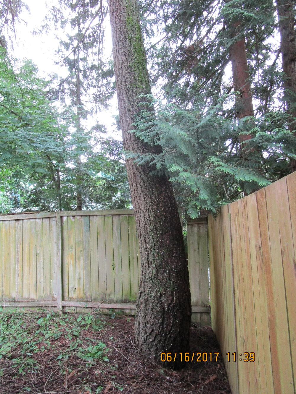 SUYU WANG BELLEVUE 6-16-17 TREE (6).JPG