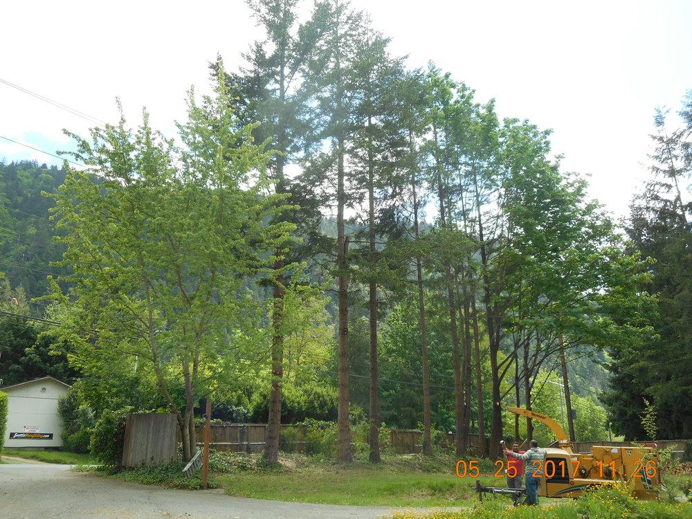Stanton Brower 5-25-17 TREE (9).JPG