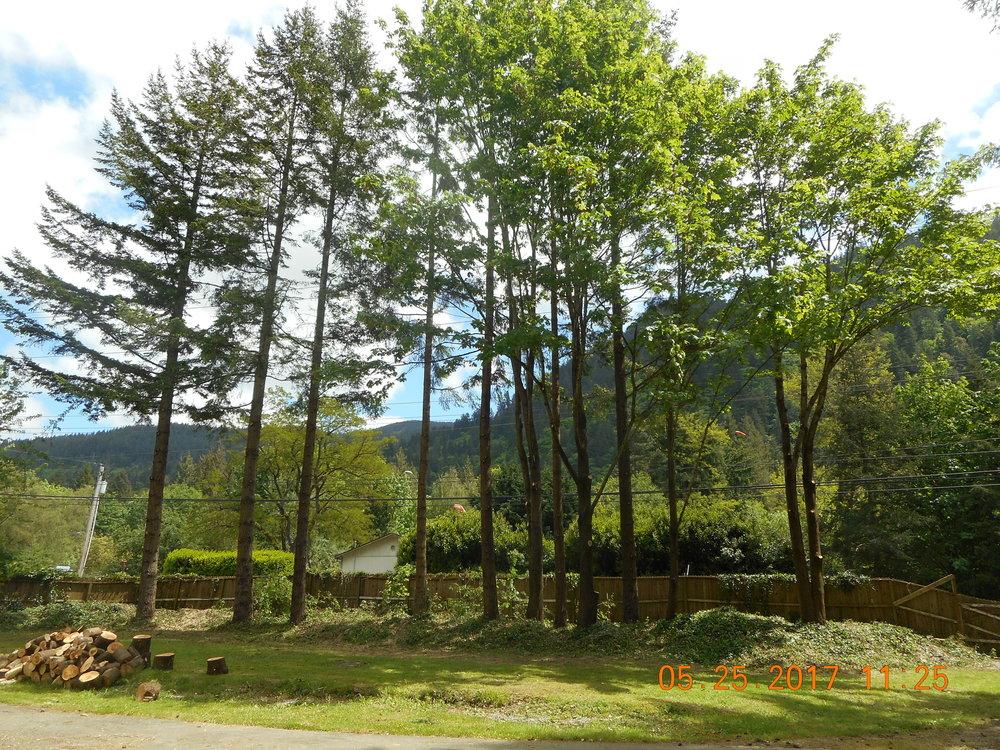 Stanton Brower 5-25-17 TREE (8).JPG