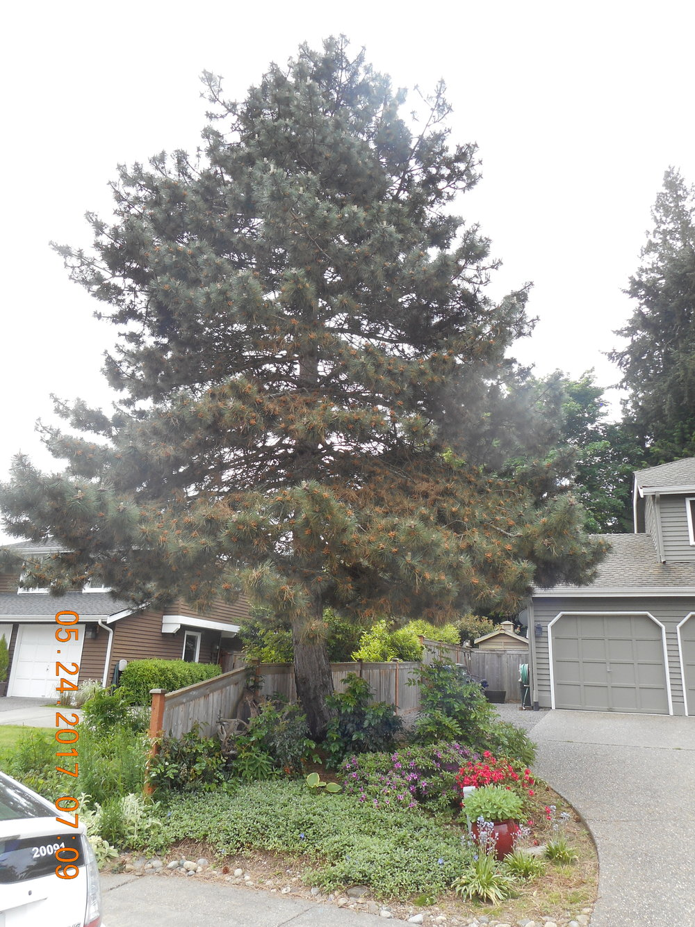 Lisa Hudson 5-24-17 TREE (2).JPG