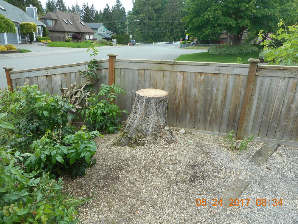 Lisa Hudson 5-24-17 TREE (4).JPG