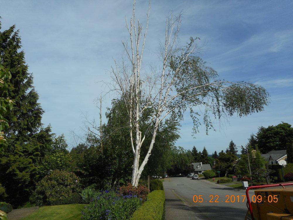Russell Lida 5-22-17 TREE (3).JPG