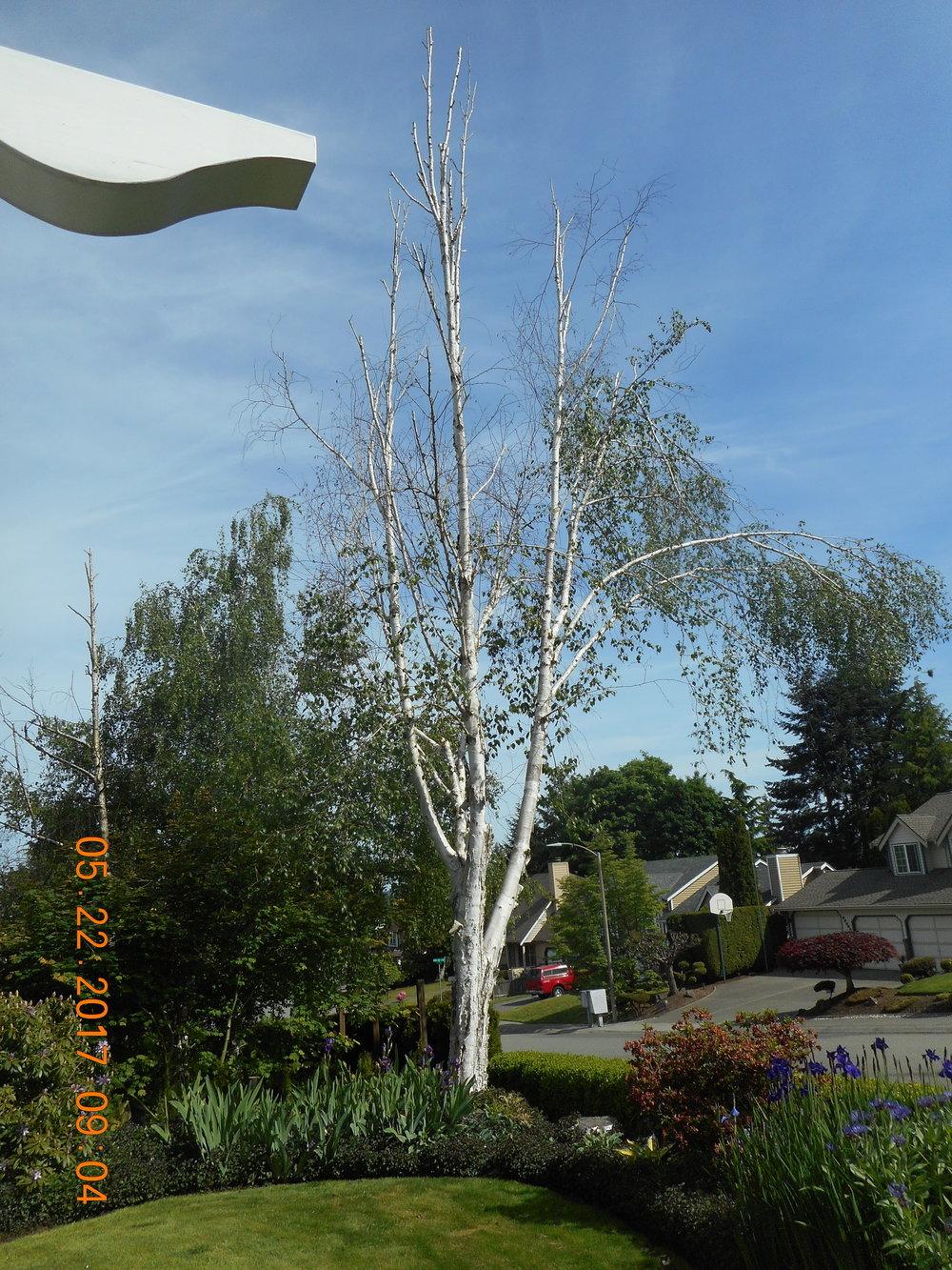 Russell Lida 5-22-17 TREE (2).JPG