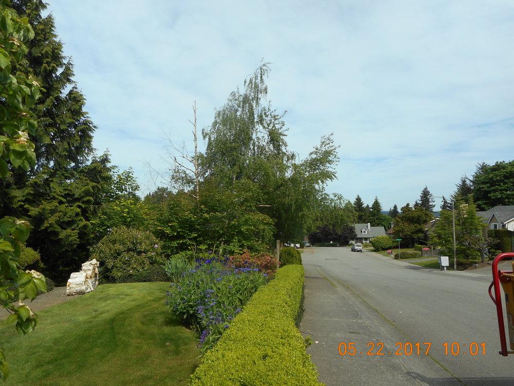 Russell Lida 5-22-17 TREE (4).JPG