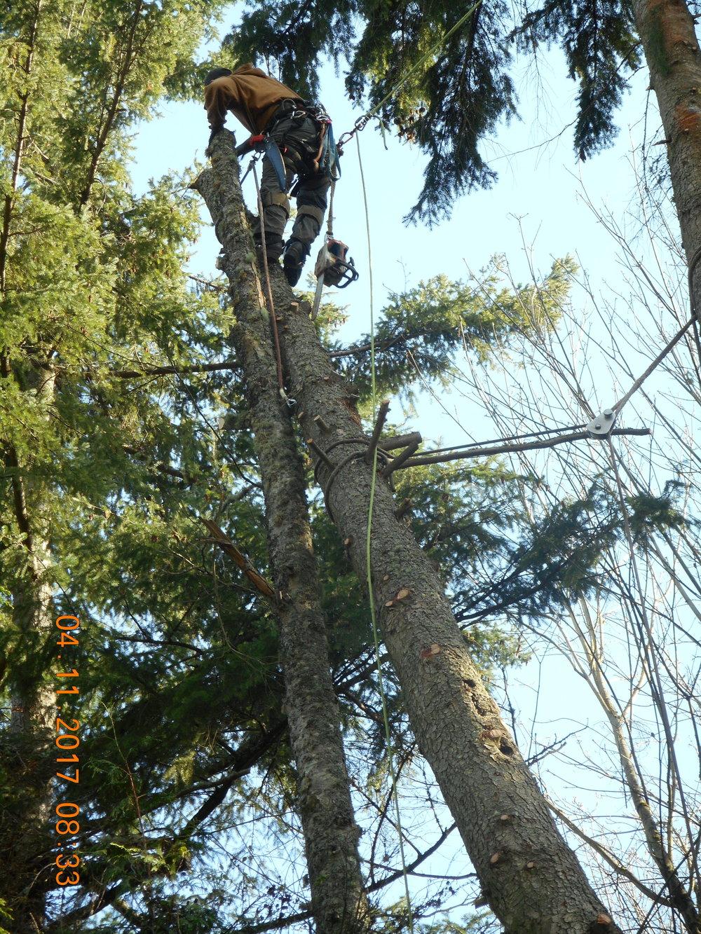 Trevor Laib 04-11-17 TREE (16).JPG