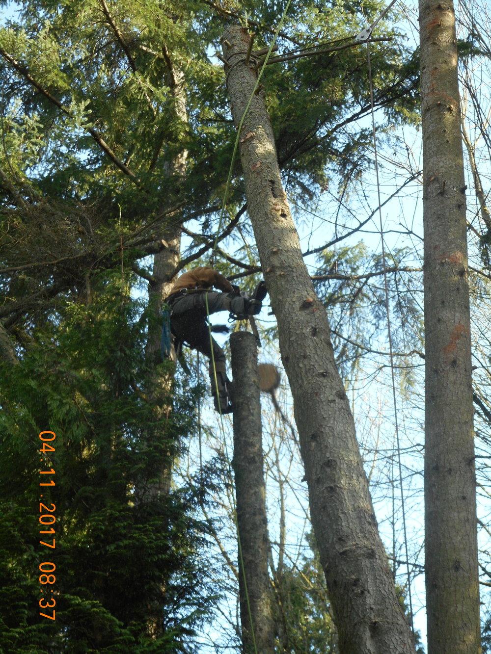 Trevor Laib 04-11-17 TREE (17).JPG