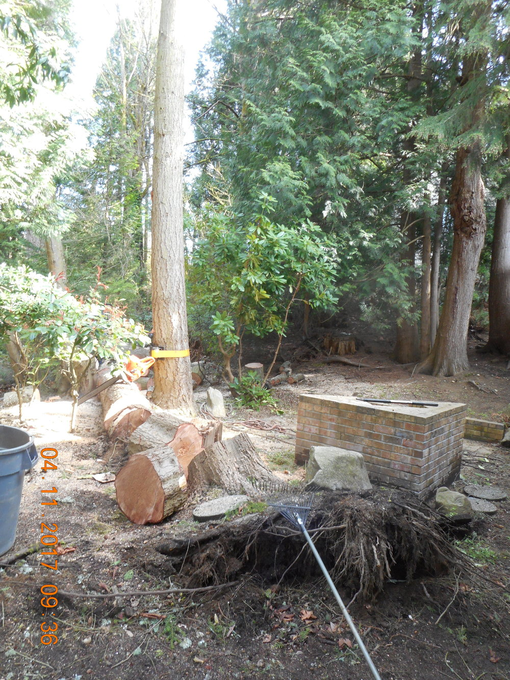 Trevor Laib 04-11-17 TREE (24).JPG