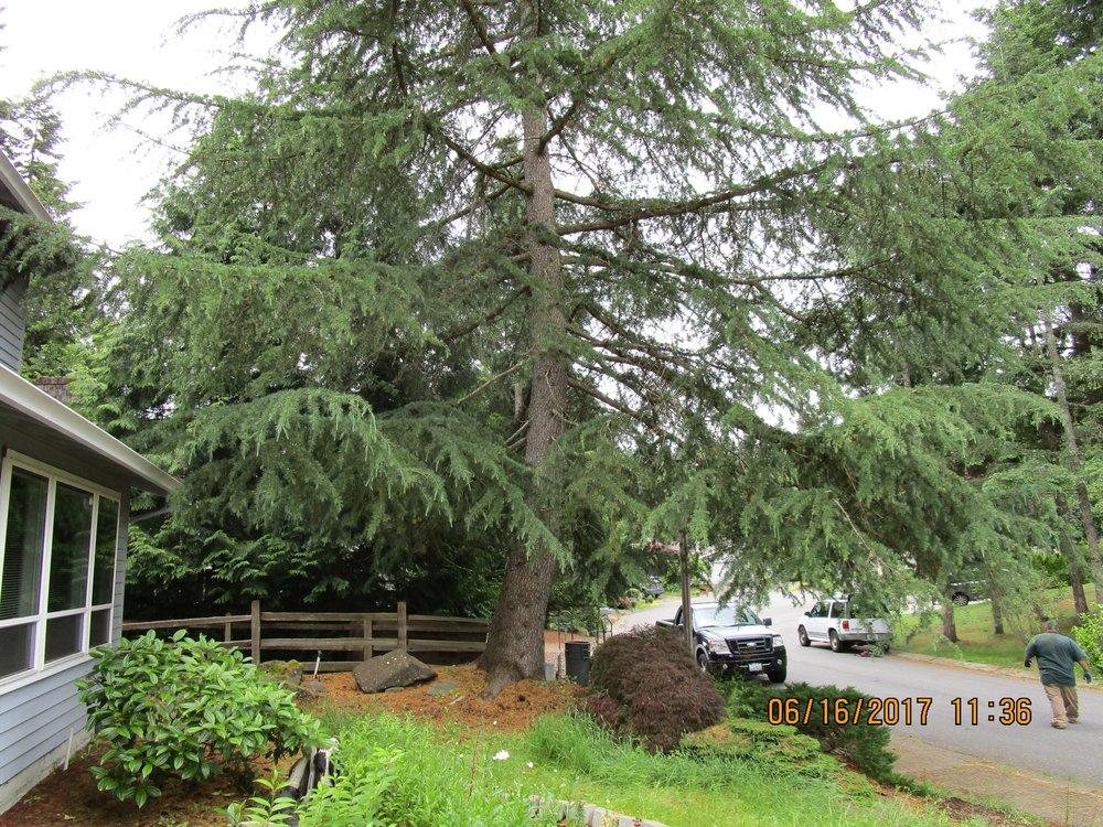 SUYU WANG BELLEVUE 6-16-17 TREE (2).JPG