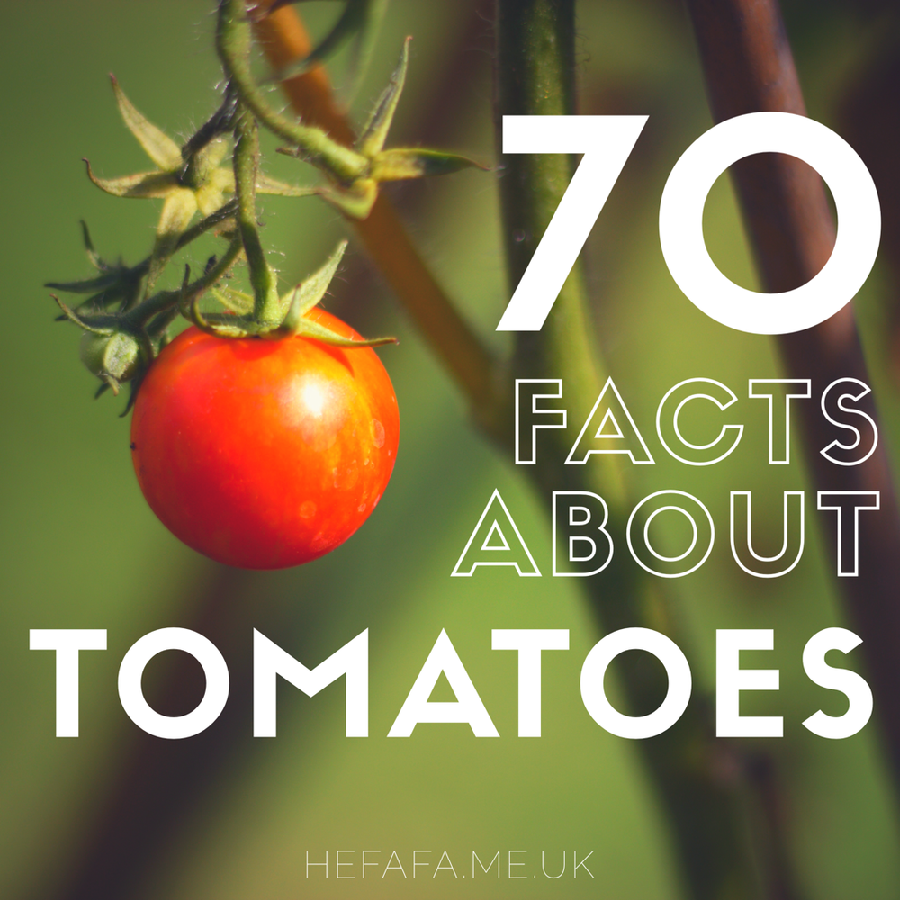 70 facts about tomatoes to celebrate my Nanny's 70th birthday!