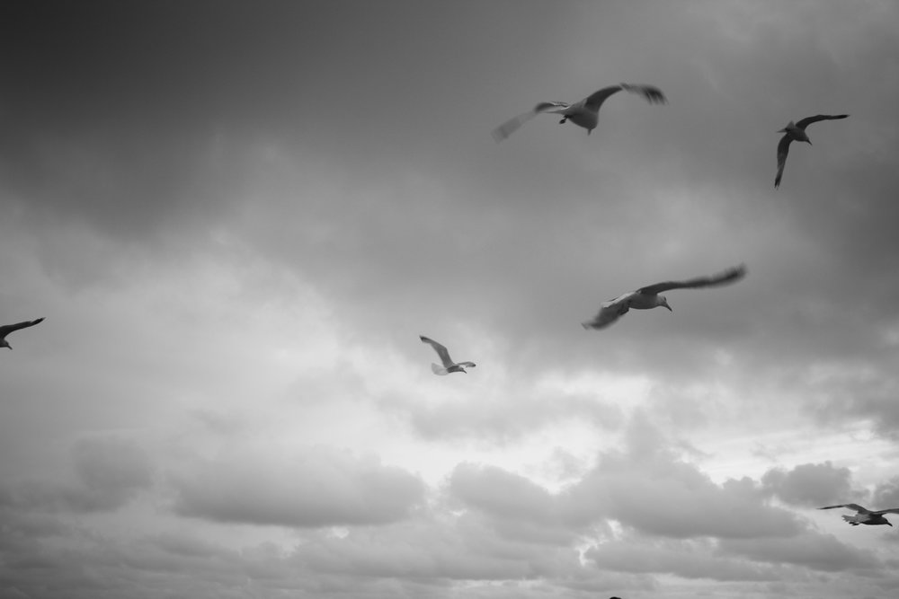 seagulls flying in a grey sky