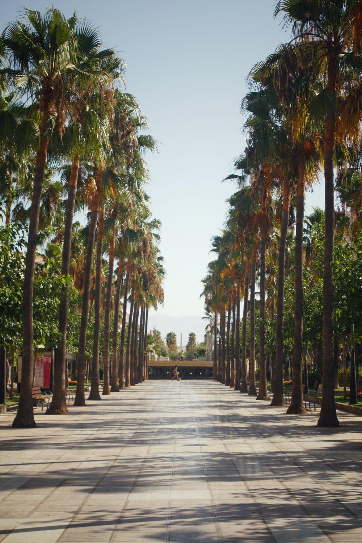palm trees in Almería