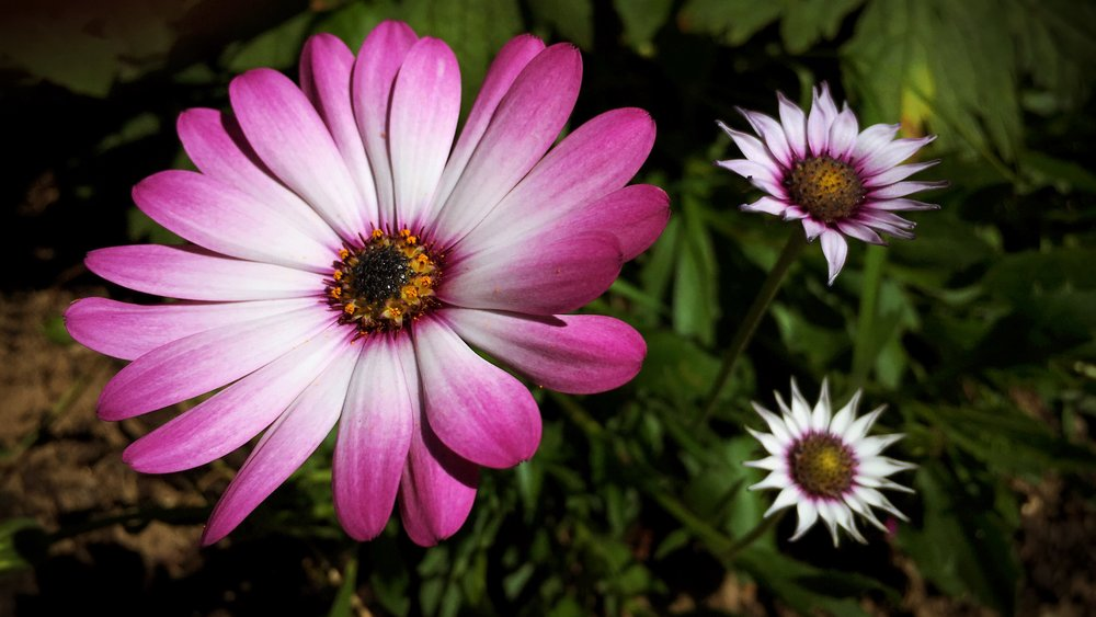 pink and white faded flowers
