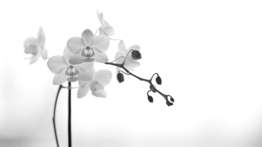 an orchid (and my first ever photo on manual!)