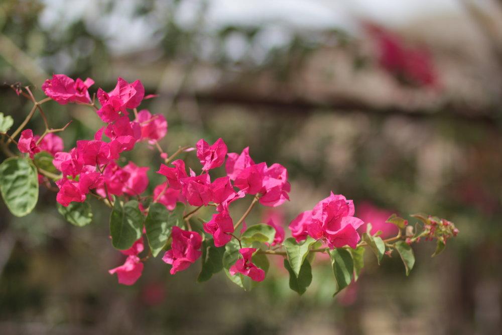 pink petals on a green branch at Cabo de Gata