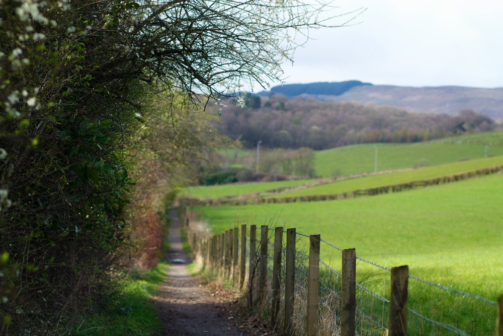 6th April - walking through the beautiful back lanes of Bearsden in Spring