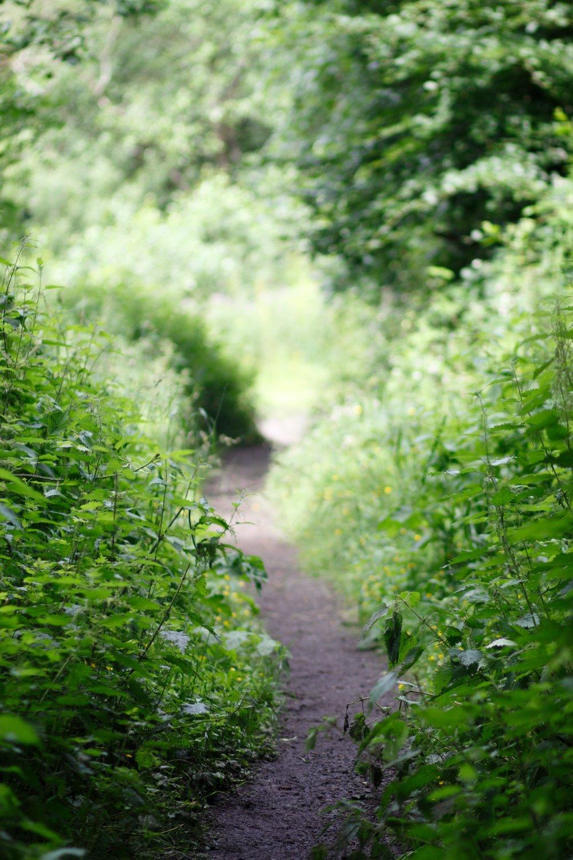 5th July - more sunny walks around Kilmardinny Loch