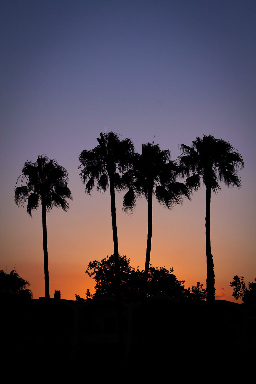 10th July - palm tree sunset