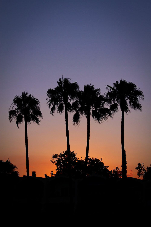 10th July - palm tree sunset