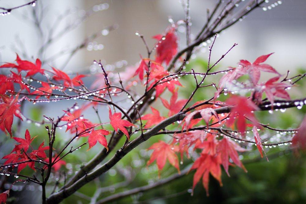 13th October - pretty raindrops