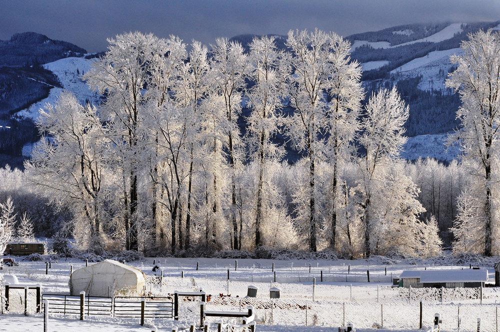 snowy cottonwoods.jpg