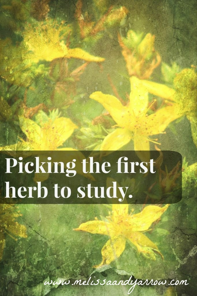 how-to-pick-the-first-herb-to-study-683x1024.jpg