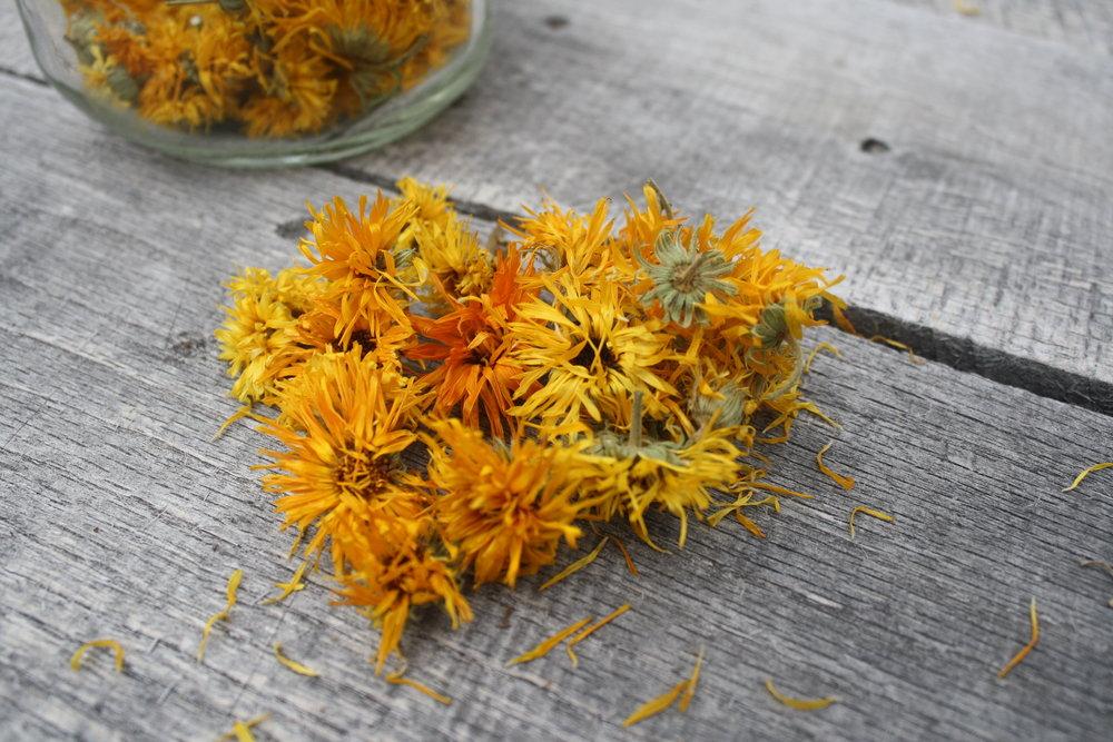 Dried Calendula blooms