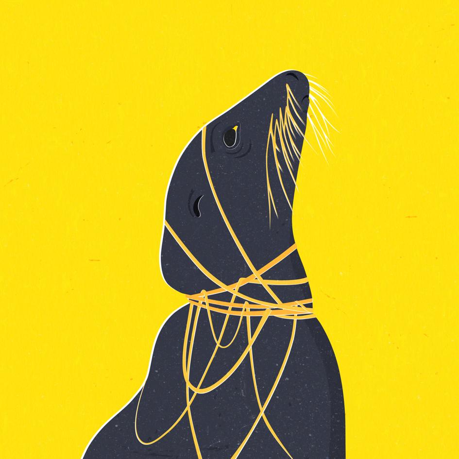 Seal web.png