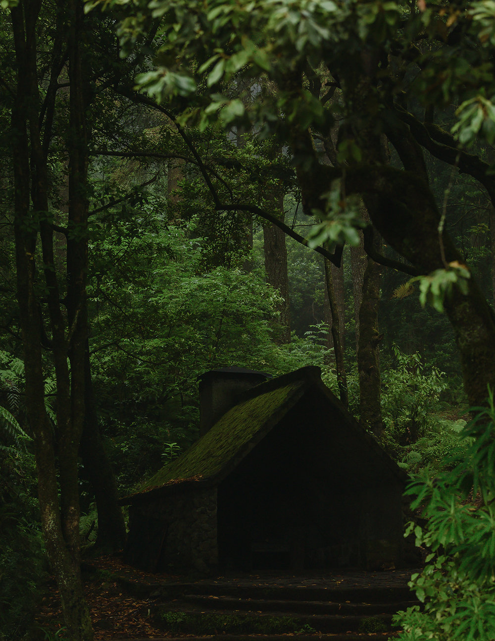 house_in_the_woods.jpg