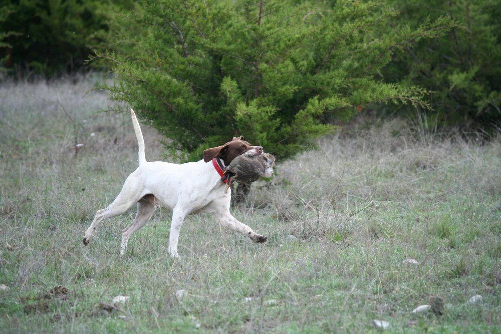 Dogs_06.jpg