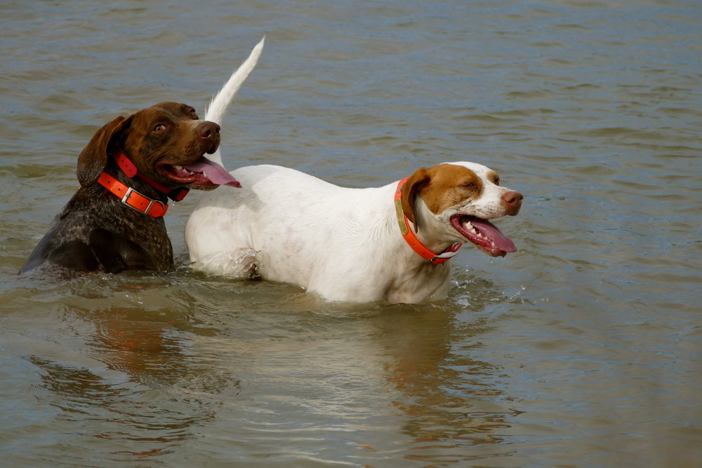 Dogs_23.jpg