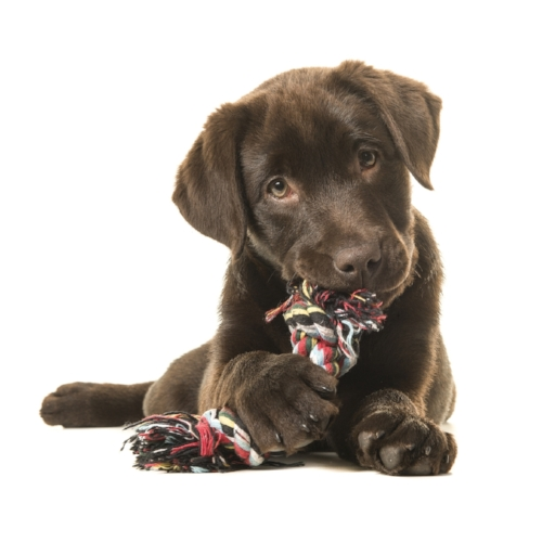 private puppy training in temecula ca