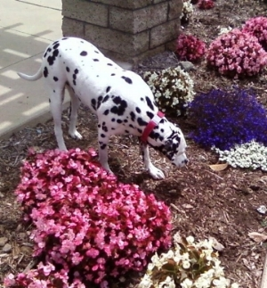 Stop and smell the flowers, and let your dog explore and appreciate the world.