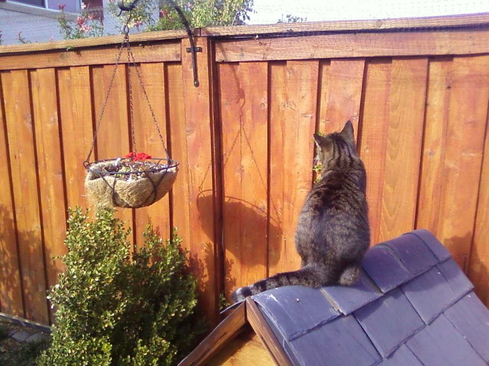 To keep cats in the yard Purr...fect Fence has several options.