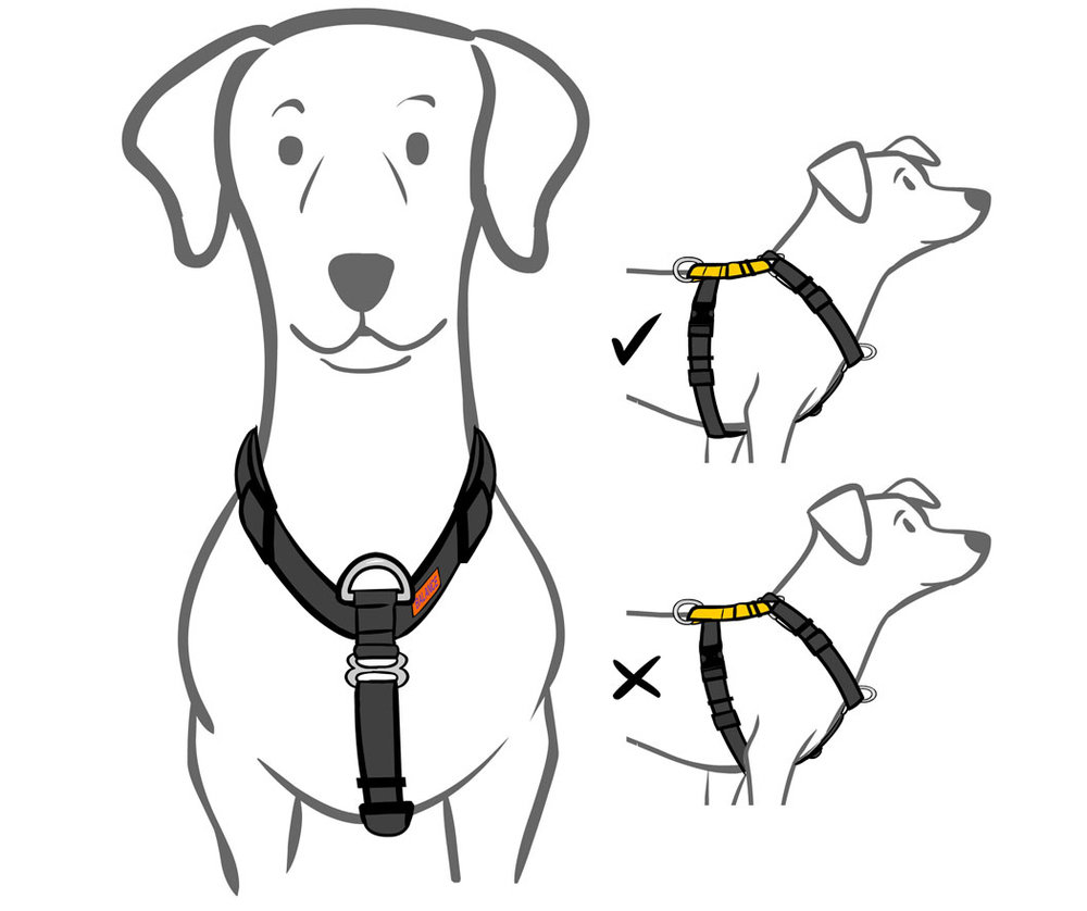 Y HARNESS  (Blue-9 fitting guide)