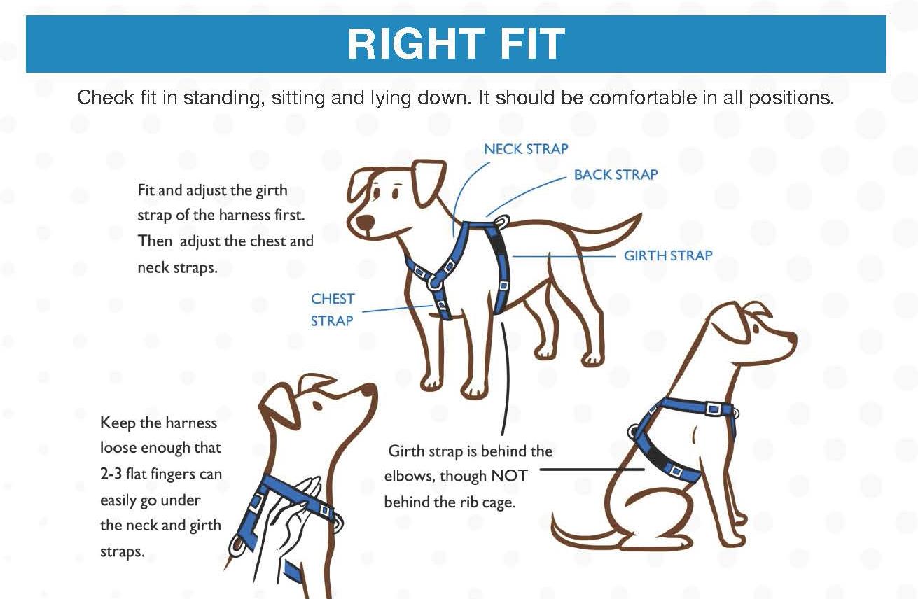 Harnesses — Homeskooling 4 Dogs