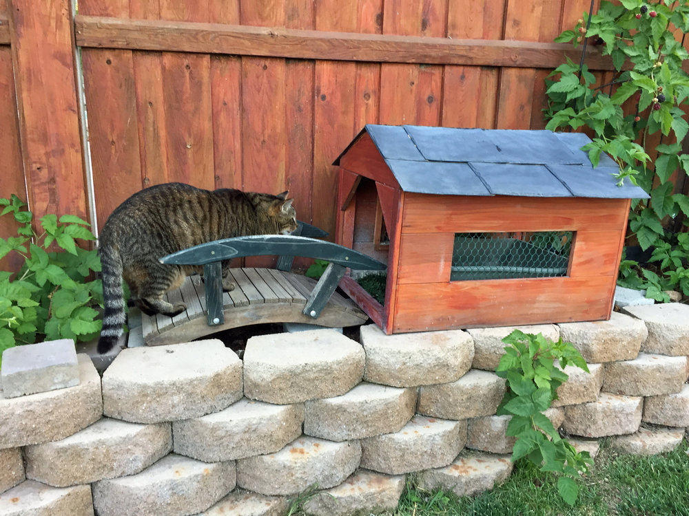 OUTDOOR LITTER BOX