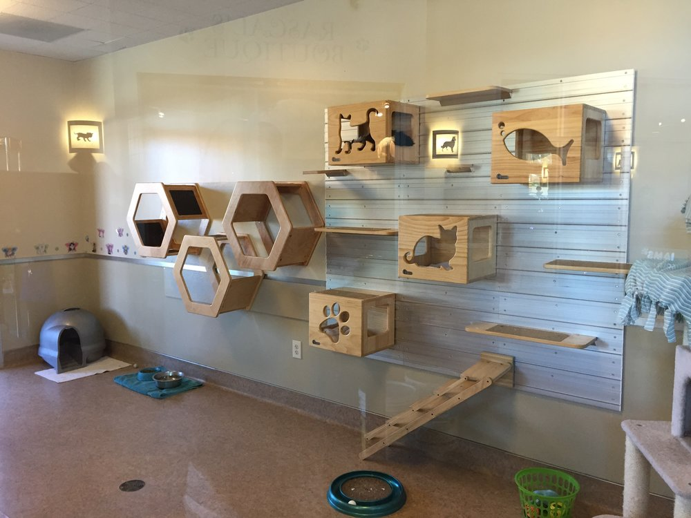 CAT WALL - ANIMAL FRIENDS OF THE VALLEYS, WILDOMAR, CALIFORNIA