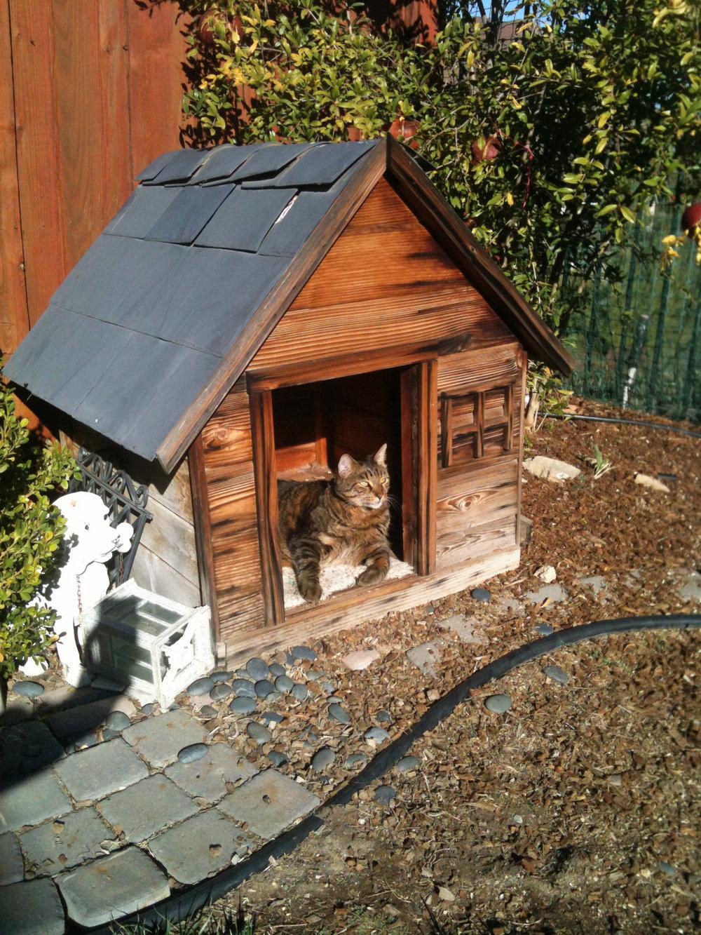 mr doghouse.jpg