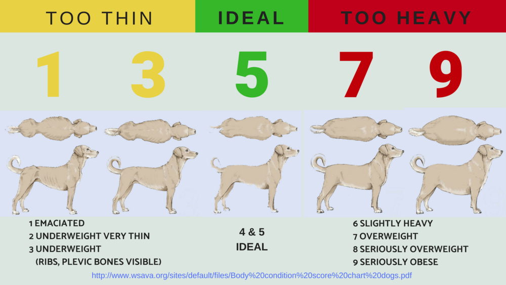 IDEAL FOR ALL DOGS IS 4 & 5