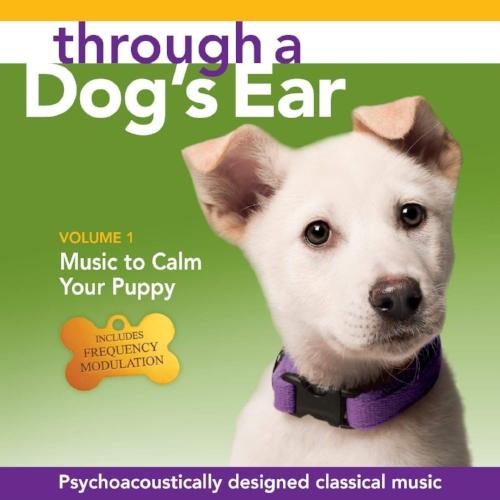 music puppy.jpg