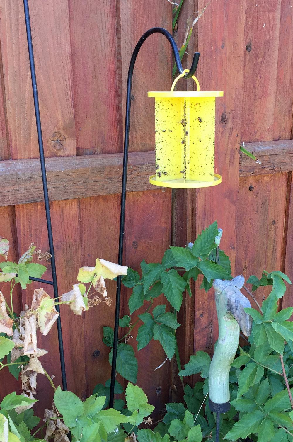 Fly trap a.jpg