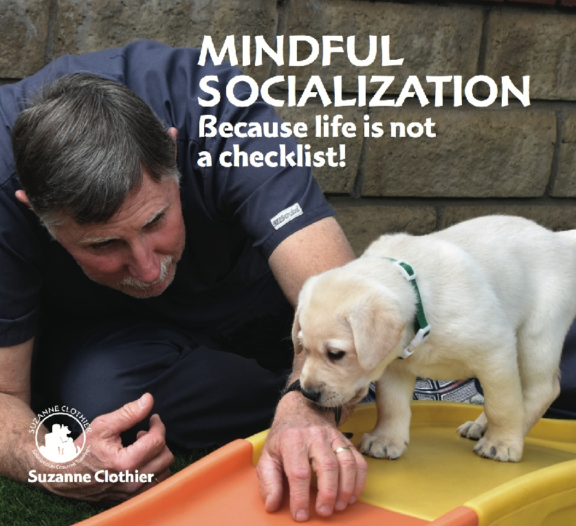 MINDFUL SOCIALIZATION VIDEO IS HIGHLY RECOMMENDED