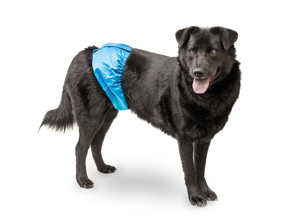 BELLY BAND FOR MALE DOGS