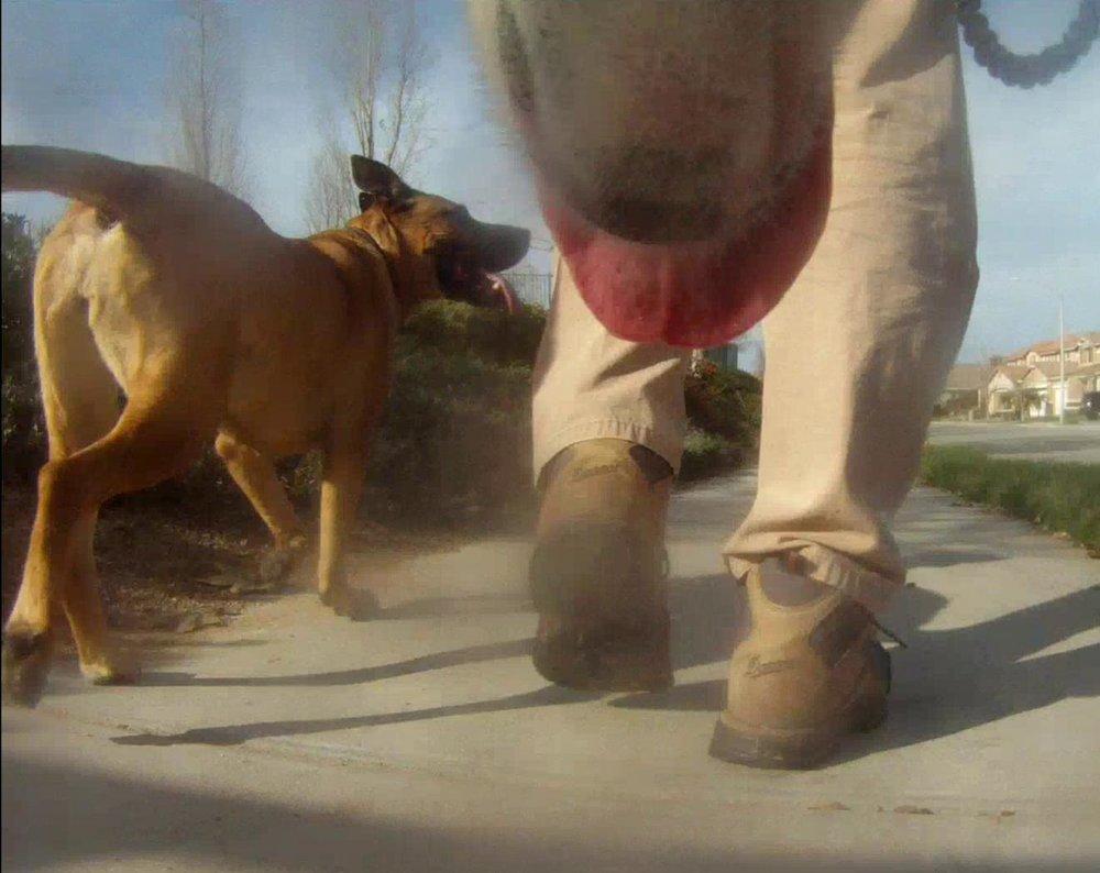 Walking w dogs.jpg