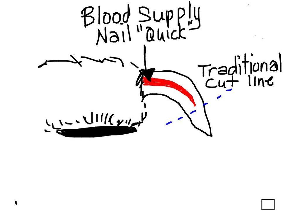 nail cutting.jpg
