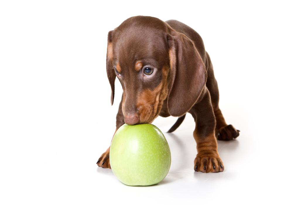 puppy-apple-960x700.jpg