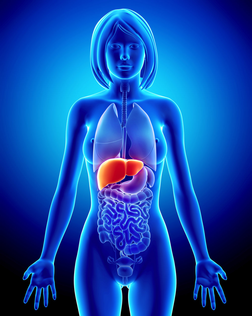 liver-structure